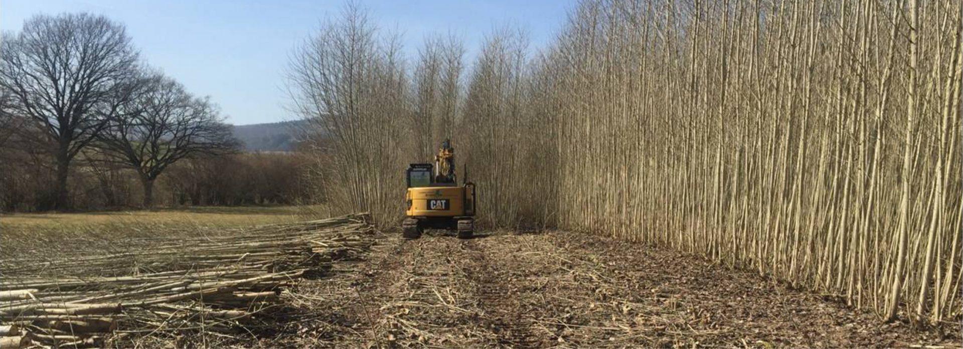 Energieholzernte auf einer Pappelplantage der Viessmann GmbH in Allendorf